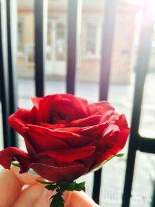 cvl rose